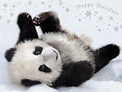 Posing Pandahappy Holidays Card ALL