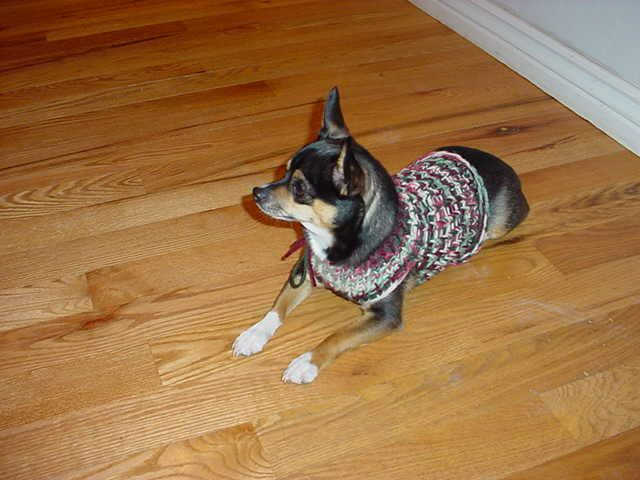 Small Round Loom Patterns Knifty Knitter Dog Sweater