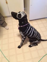 Skeleton Dog! Non-toxic and washable paint :) really easy ...