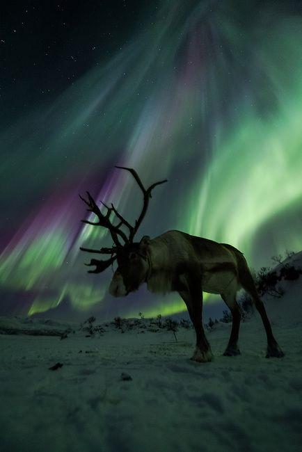 Northern Lights Forecast Iceland Tonight