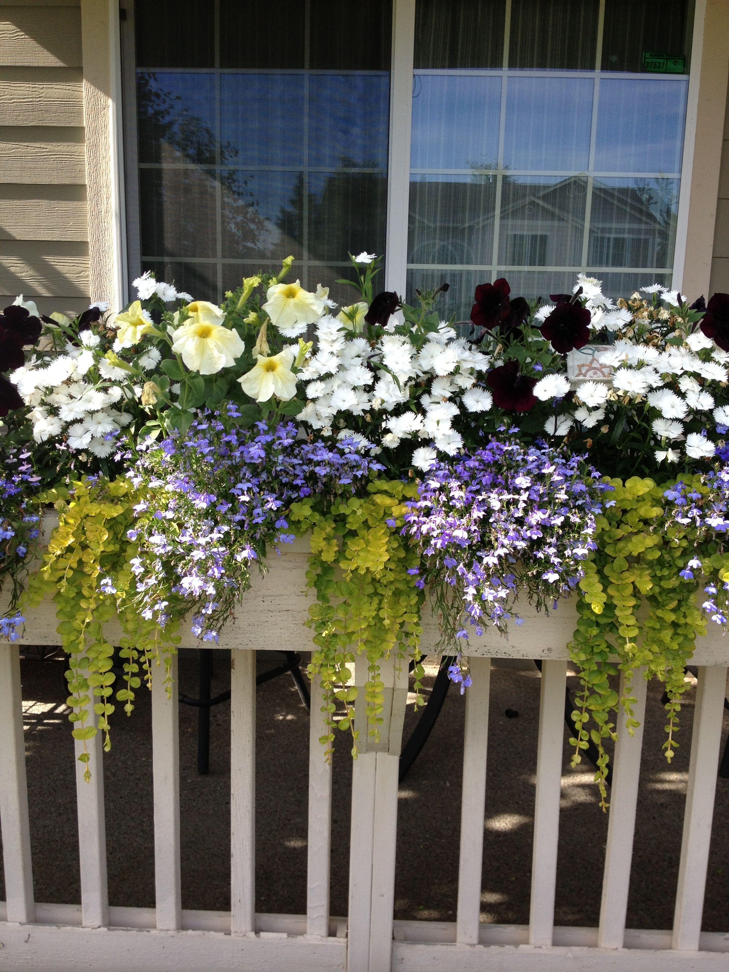 White Window Planter Boxes