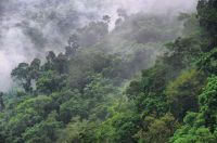 canopy animals amazon rainforest photo - photos and ...