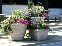 Easy Flower Pot Ideas for Garden  Home Designs | Lovely ...