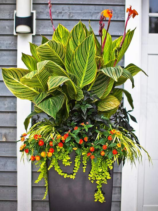 Best Tropical Flowers For Your Patio Gardens Outdoor Living And