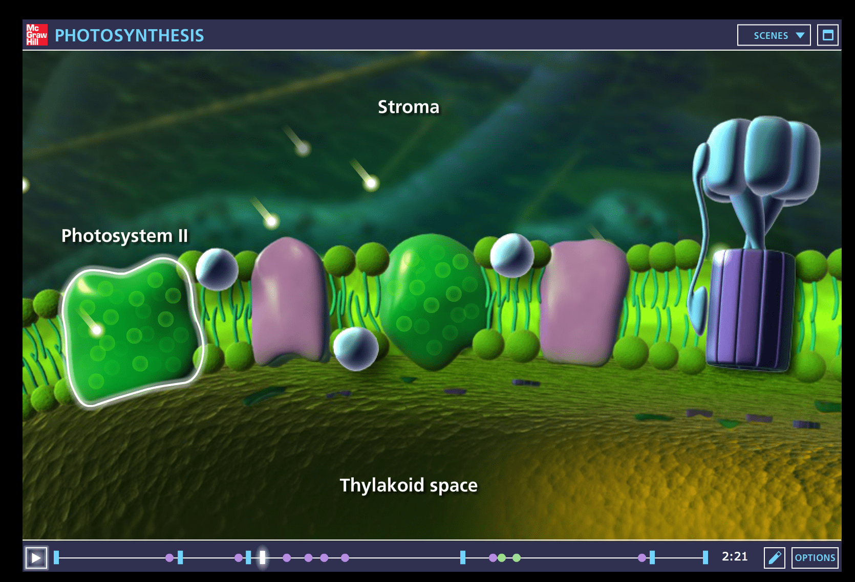 One Of The Best Photosynthesis Animations On The Web This