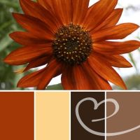 Beautiful burnt orange color palette used in a Labor Day ...