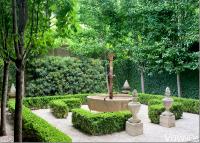 Formal courtyard: Podocarpus, Boxwood, Pleached Pear Trees