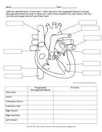 Human Anatomy Labeling Worksheets Human Body System ...