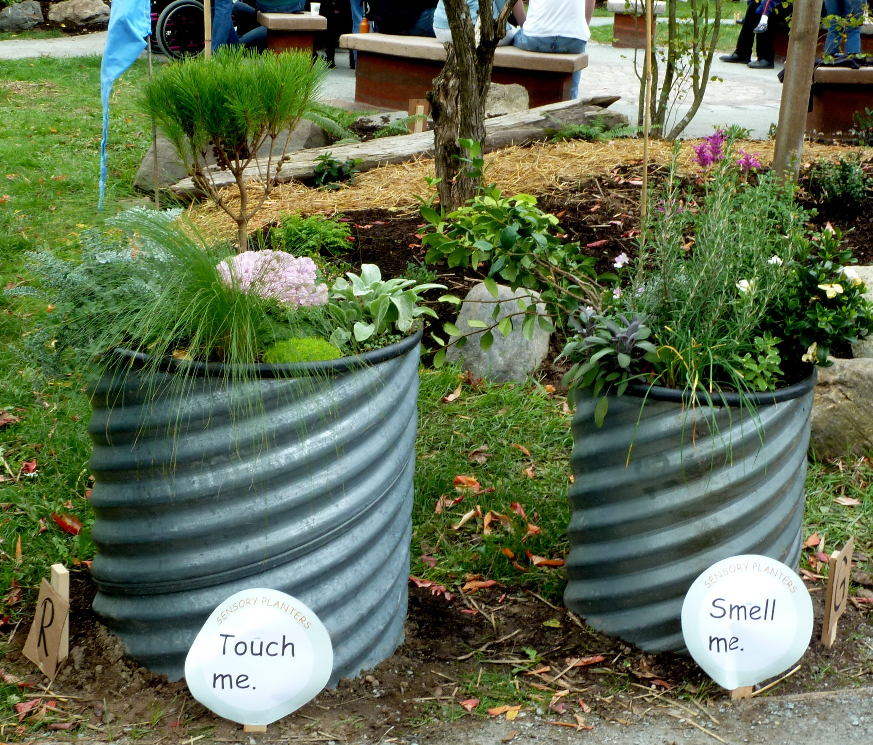 I Love The Idea Of Having Different Garden Beds Barrels For The