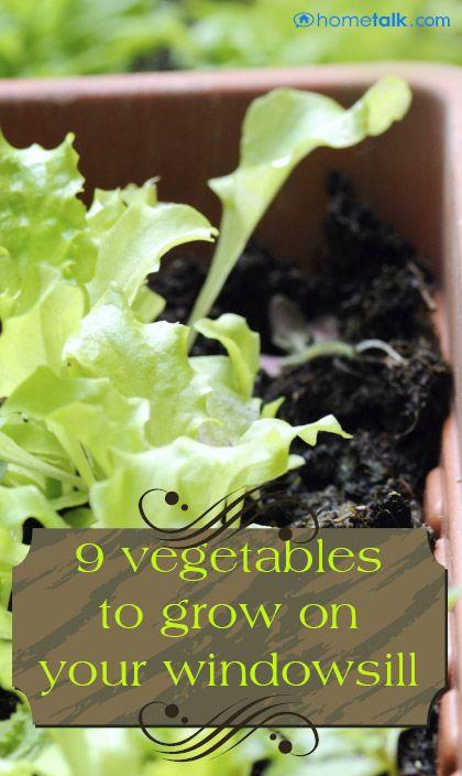 9 Vegetables For Your Windowsill! Gardens Veg Garden And The