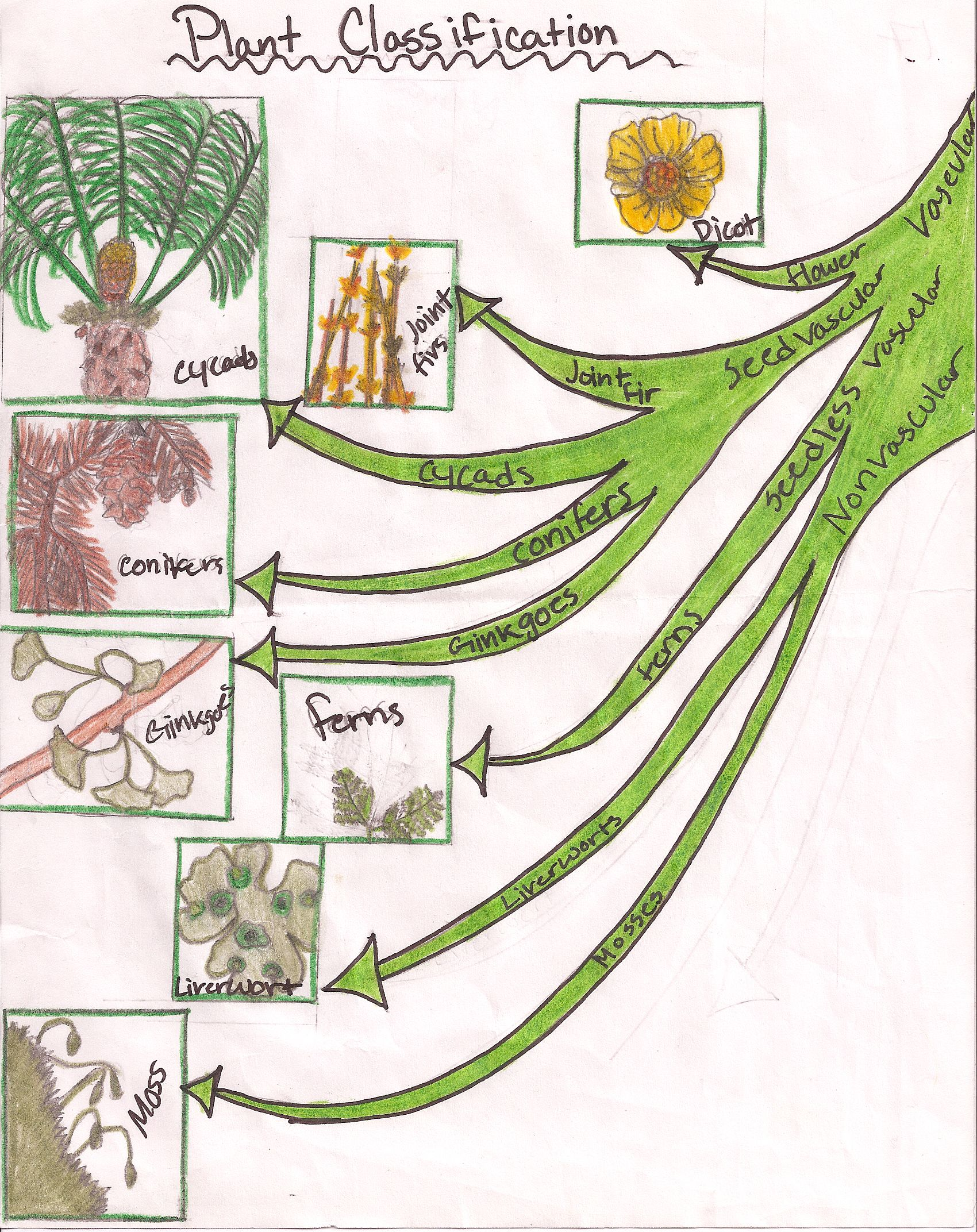 Plant Classification To Understand The Different Levels Of
