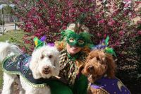 Mardi Gras Dog Costume | MARDI GRAS | Pinterest | Dog ...