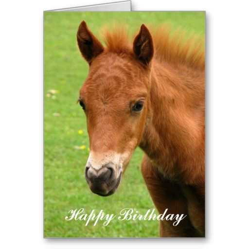 Birthday Lovers Wishes Horse
