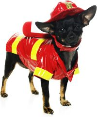 Fire dog costume | Dogs Dressed Up | Pinterest | Animals ...