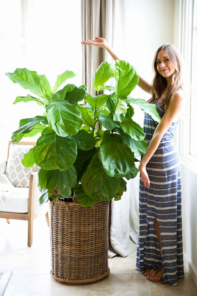 How to Keep Your Houseplants Green  Gorgeous  Planters