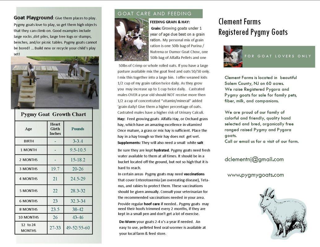 Nigerian Dwarf And Pygmy Goat Care And Feeding Woodstown Nj
