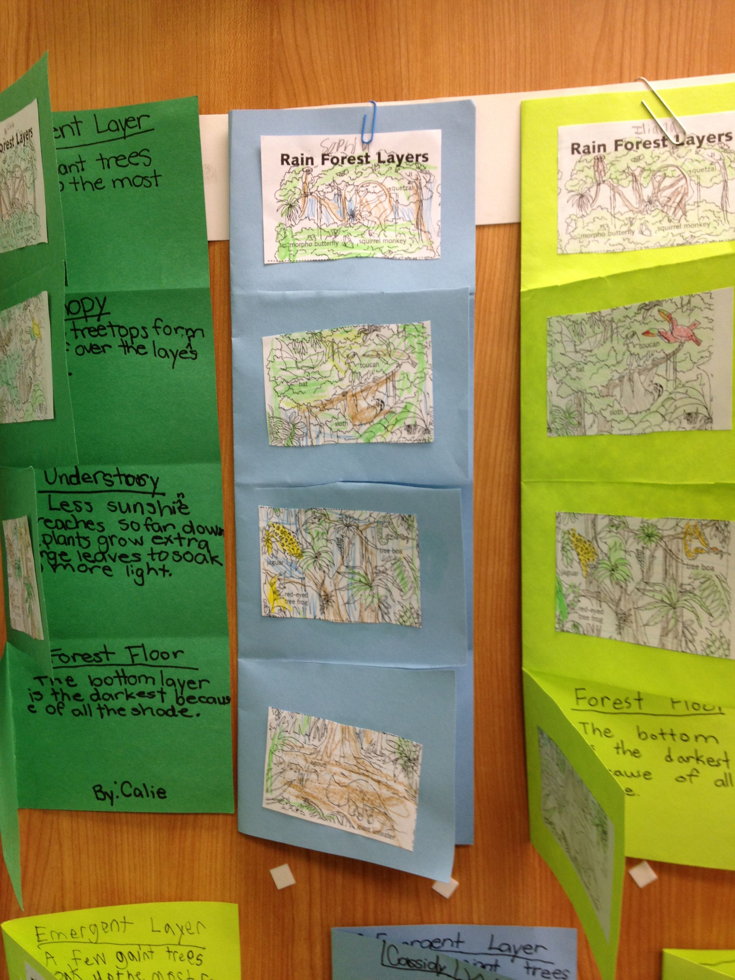 Layers Of Rainforest Foldable