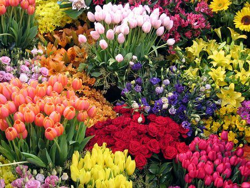 Flower Gardens Home Decoration Information Gardens And