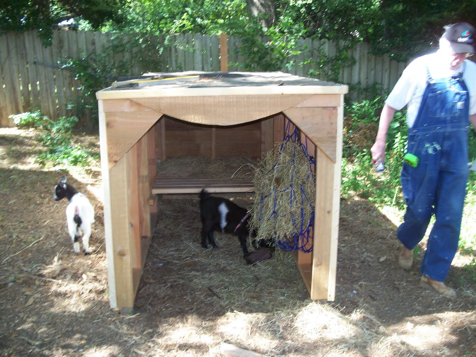 Goat Houses Well We Were Exhausted Afterwards Anyway Goat