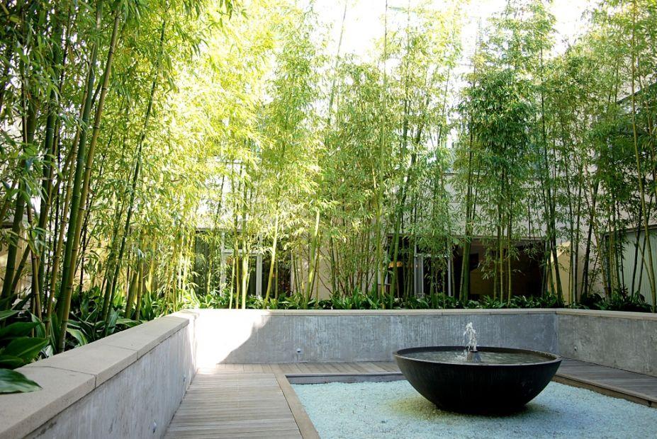 Bamboo Garden Ideas Related Keywords Suggestions Bamboo Garden