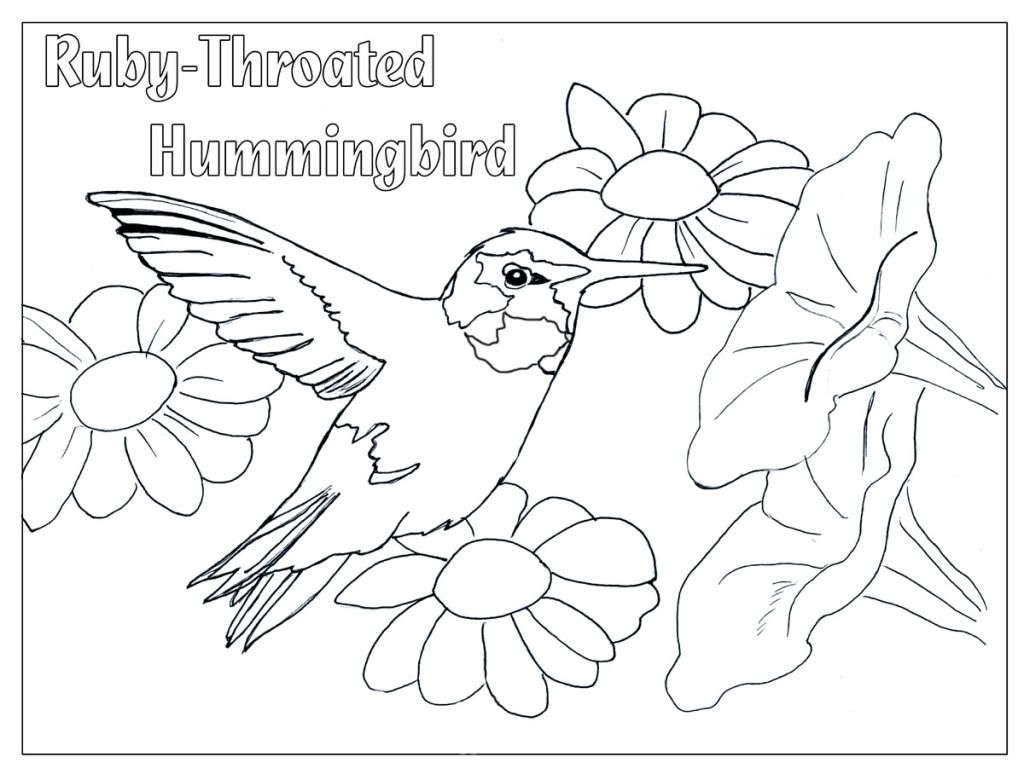 Hummingbird Color Page