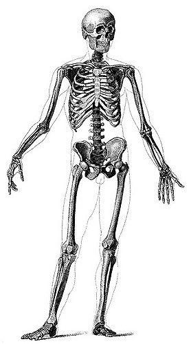 Anatomy For The Artist Jeno Barcsay Pdf Compressor