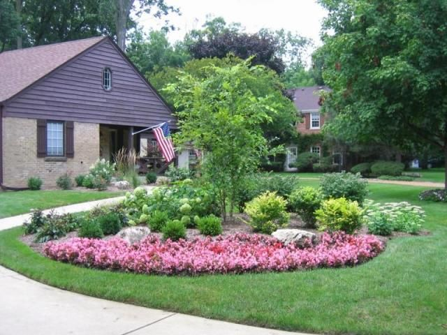 Specimin Trees For Landscaping Ideas Front House Landscape