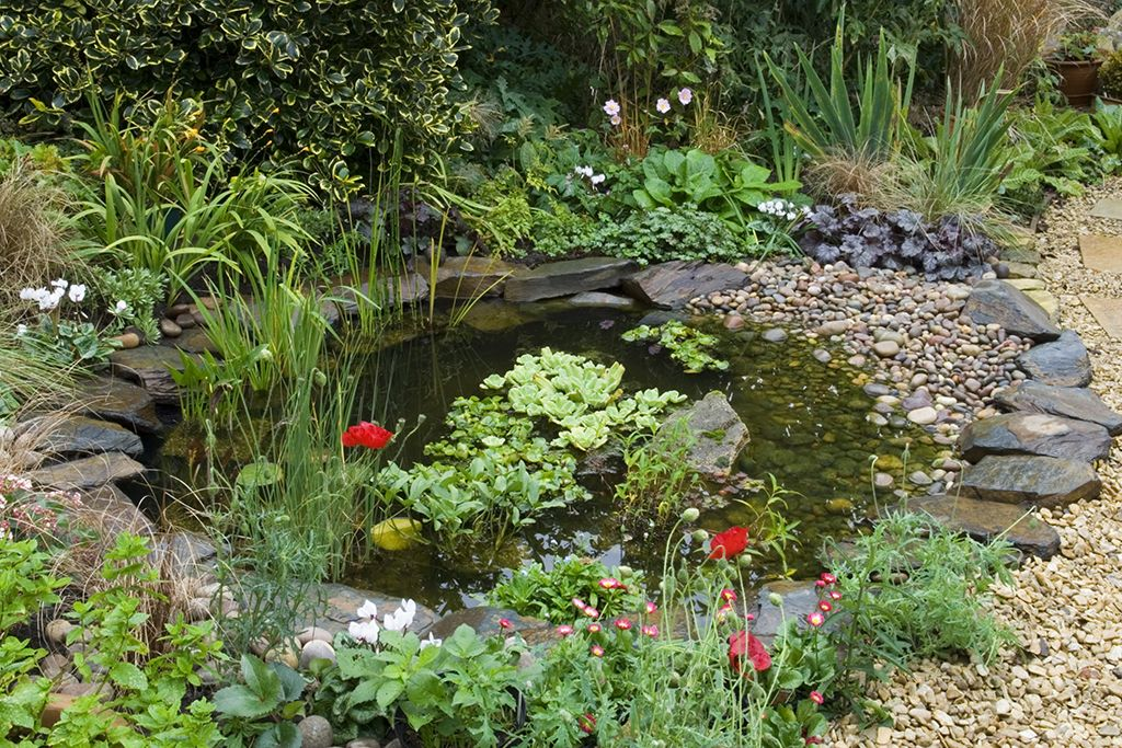 Shallow Water Pond Plants
