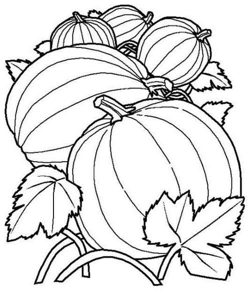 Free Coloring Pages Of Vegetable Patch