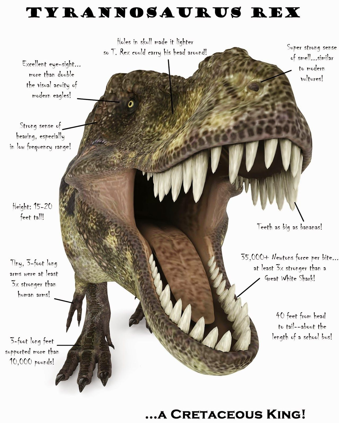 A New Science Project Amp How To Get A T Rex Poster