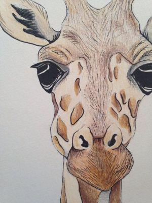 giraffe drawing face drawings pencil animal animals a5 elephant draw giraffes realistic using paintings cartoon sketch head close painting ink