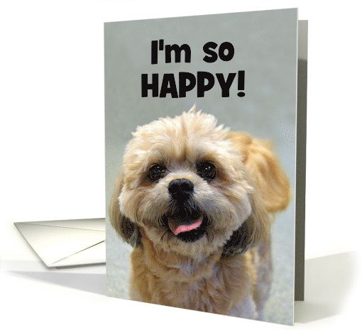 Happy Shih Tzu Happy Birthday Card The O'jays Texts And