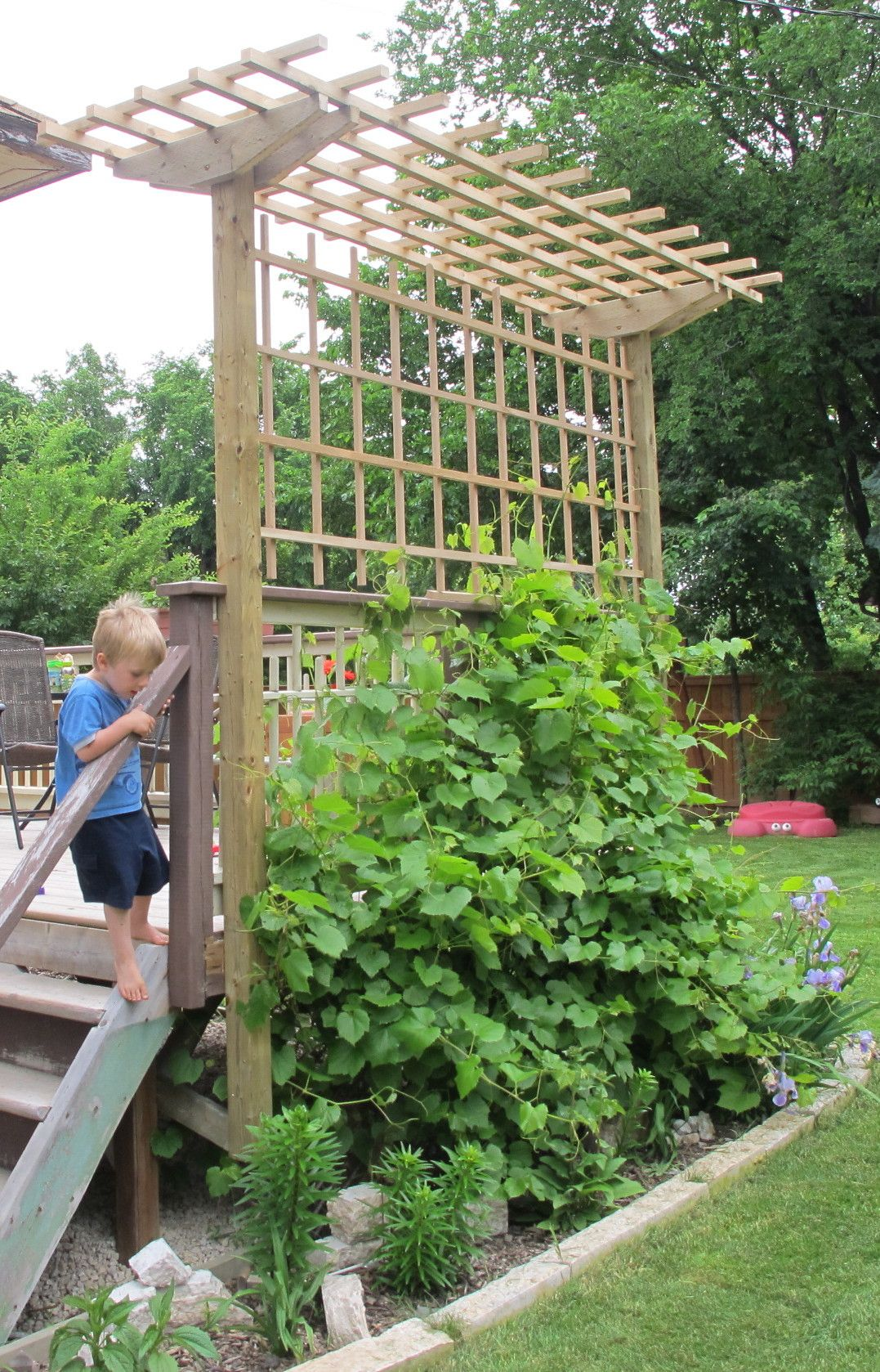 Trellis On Pinterest Trellis Garden Trellis And Tomato