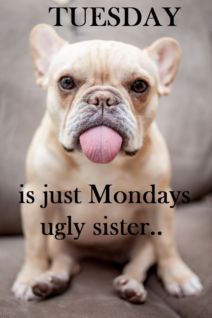 Monday Blues Quotes Funny
