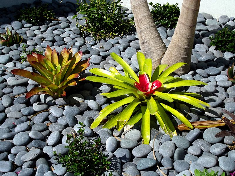 River Stones As Mulch For Tropical Plants Hardscape Elements