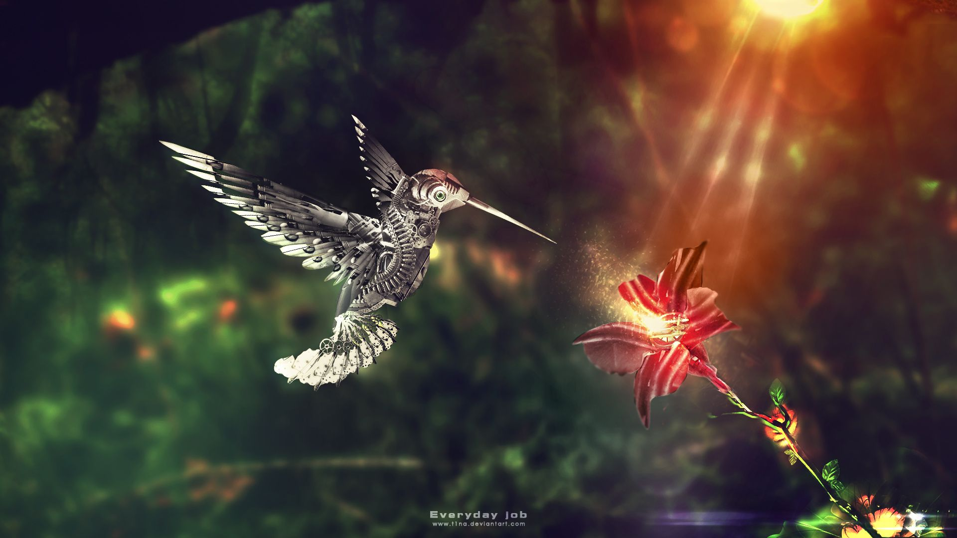 beautiful colibri bird hd wallpapers   wallpapers   pinterest   hd