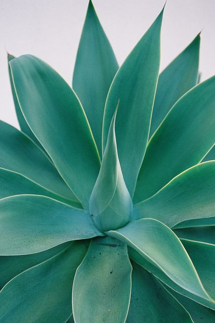 Best 25 Plants ideas on Pinterest  House plants Indoor house plants and Plant care