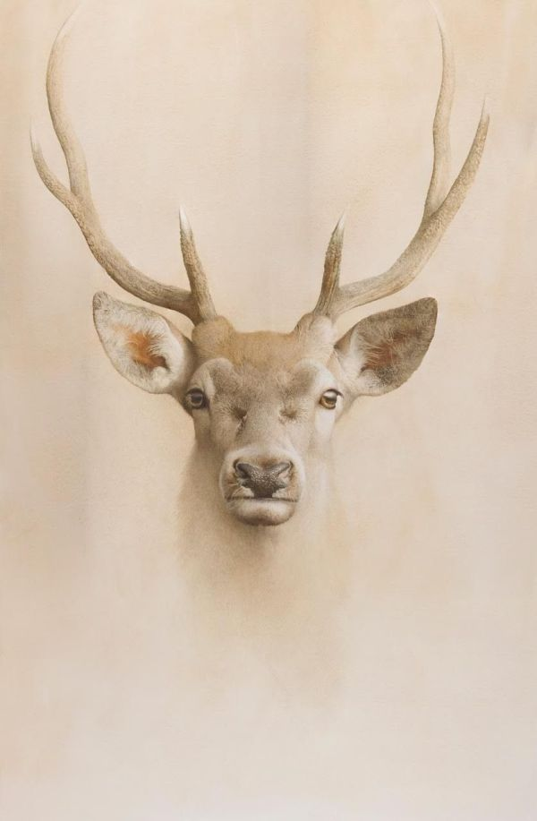 Marzio Tamer Young Deer Dry Brush Watercolor Cm 130 X 77 8 Muzzle Animals Nature Realism
