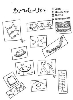 Nucleotides Dna Model Cut Out Worksheet Sketch Coloring Page