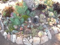 Succulent Rock Garden in Culver City, CA | succulent ...
