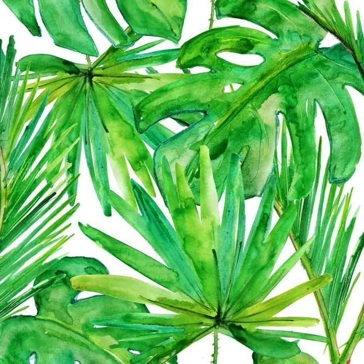 GRAPHIC  Green Leaf  Chasing Paper  Green  606  Color Lovin  Pinterest