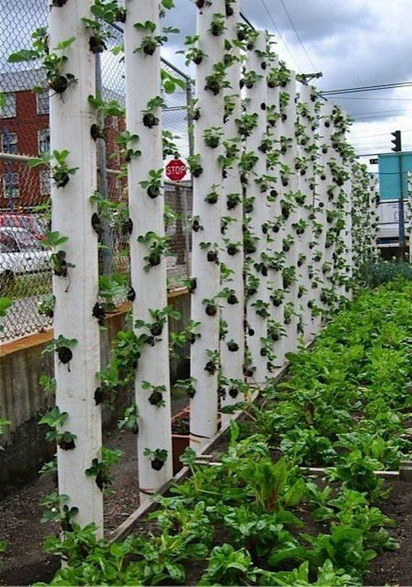 20 Cool Vertical Gardening Ideas Gardens Vegetables And Backyards