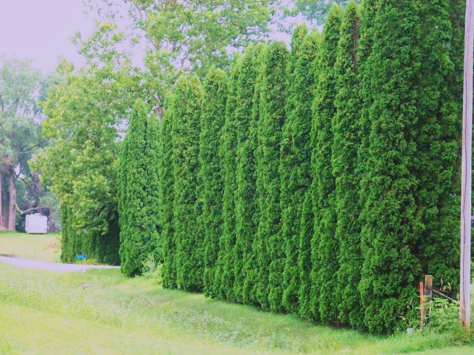 privacy trees