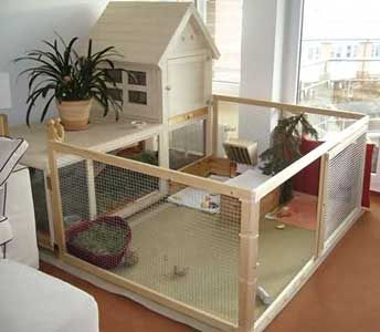 Make Your Own Guinea Pig Cage Abyssinianguineapigtips Com