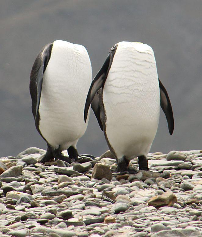 Resultado de imagen para comedy wildlife awards