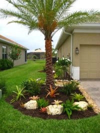 landscaping with bromeliads | Multi Foxtail, Bromeliad ...