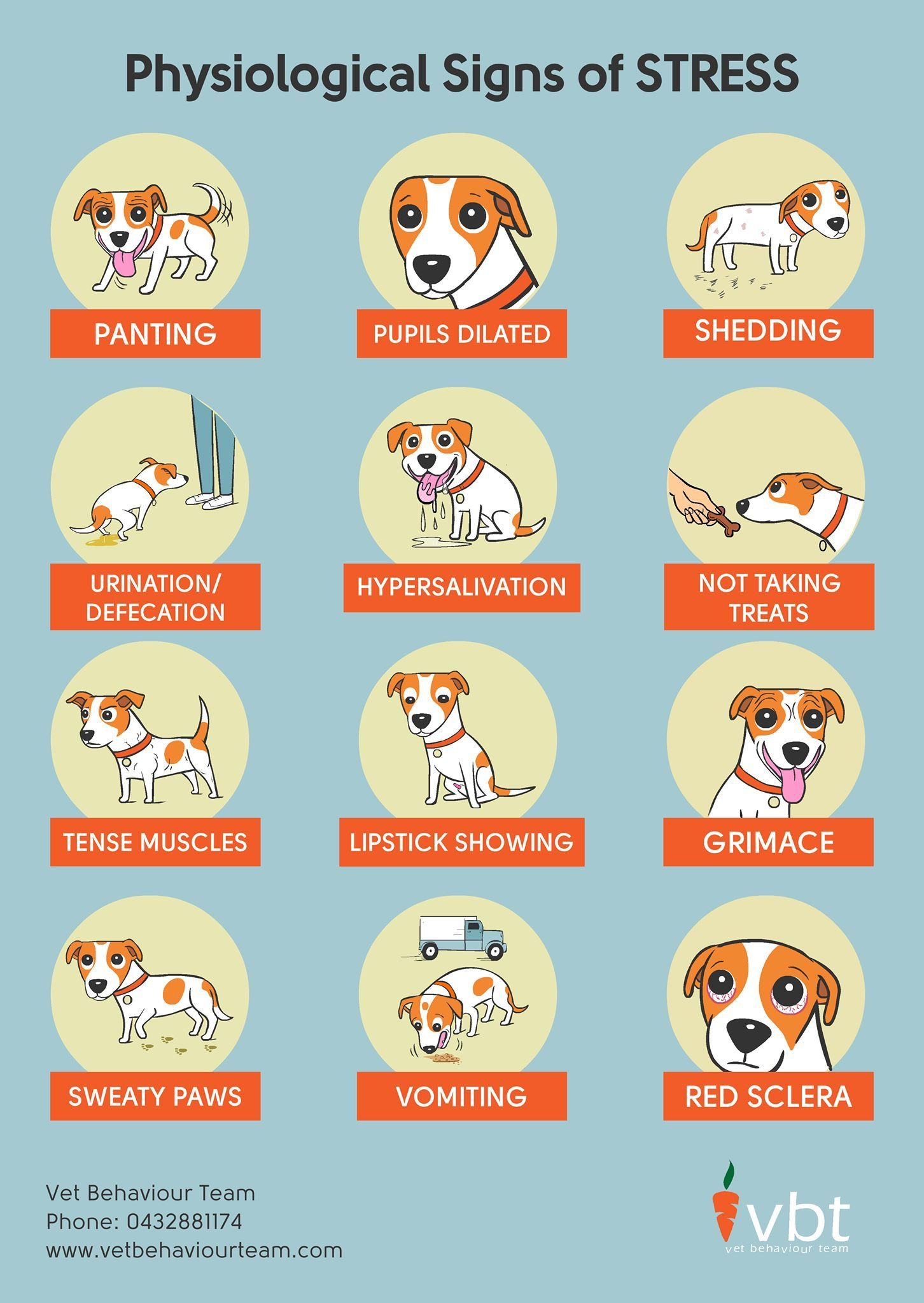 Stress Signs In Dogs