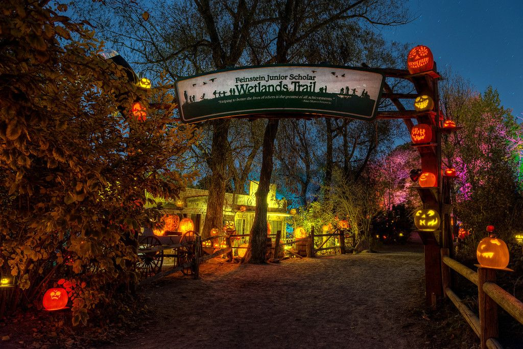 Zoo Lights Coupons