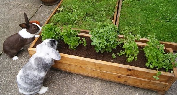 DIY Raised Beds Woden Bed Frame Herb Garden Ideas Patio Decor