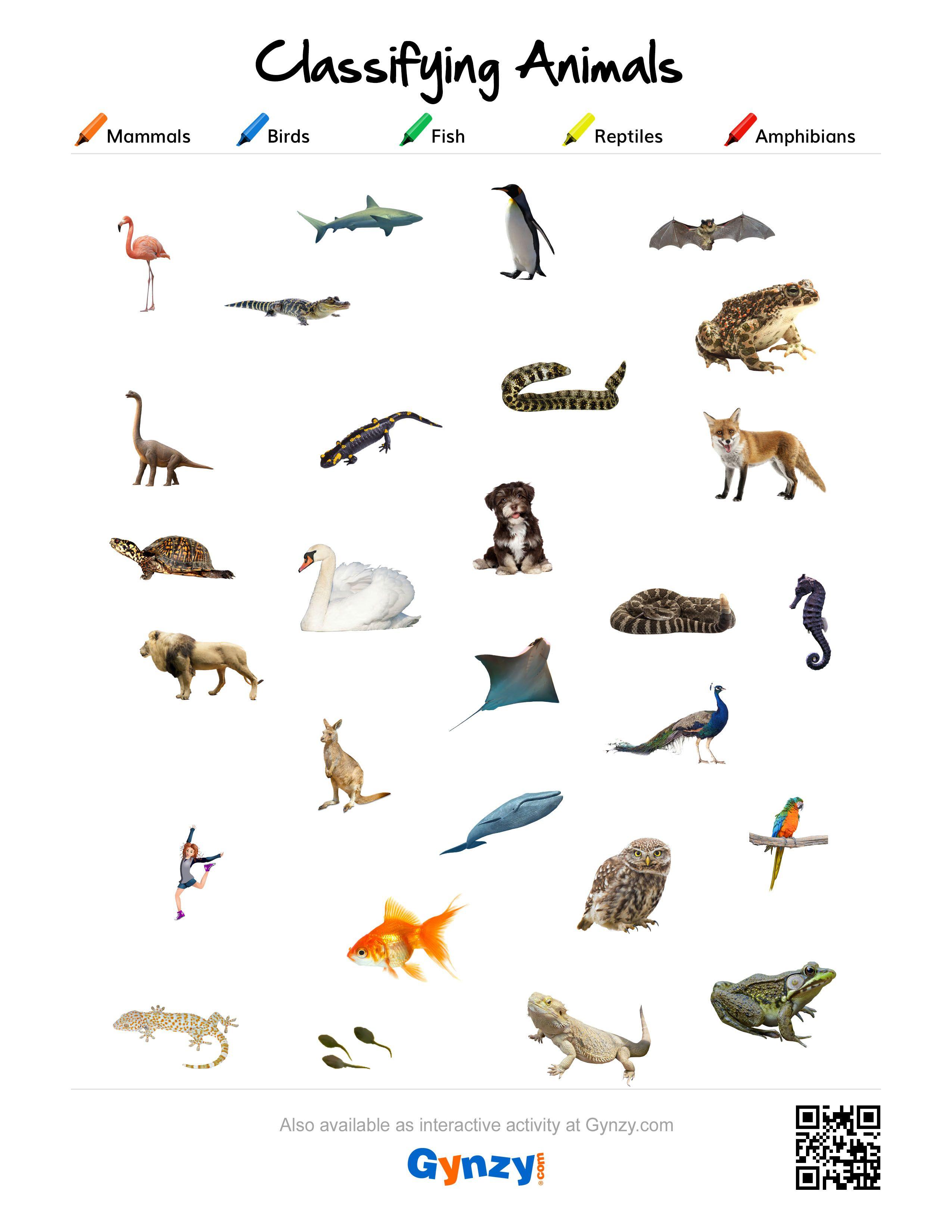 Worksheet Classifying Animals Worksheet Worksheet Fun